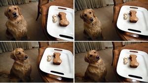 Tarta para perros